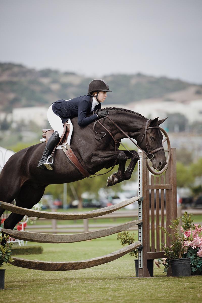 Equestrian CBD Oil healthy horses