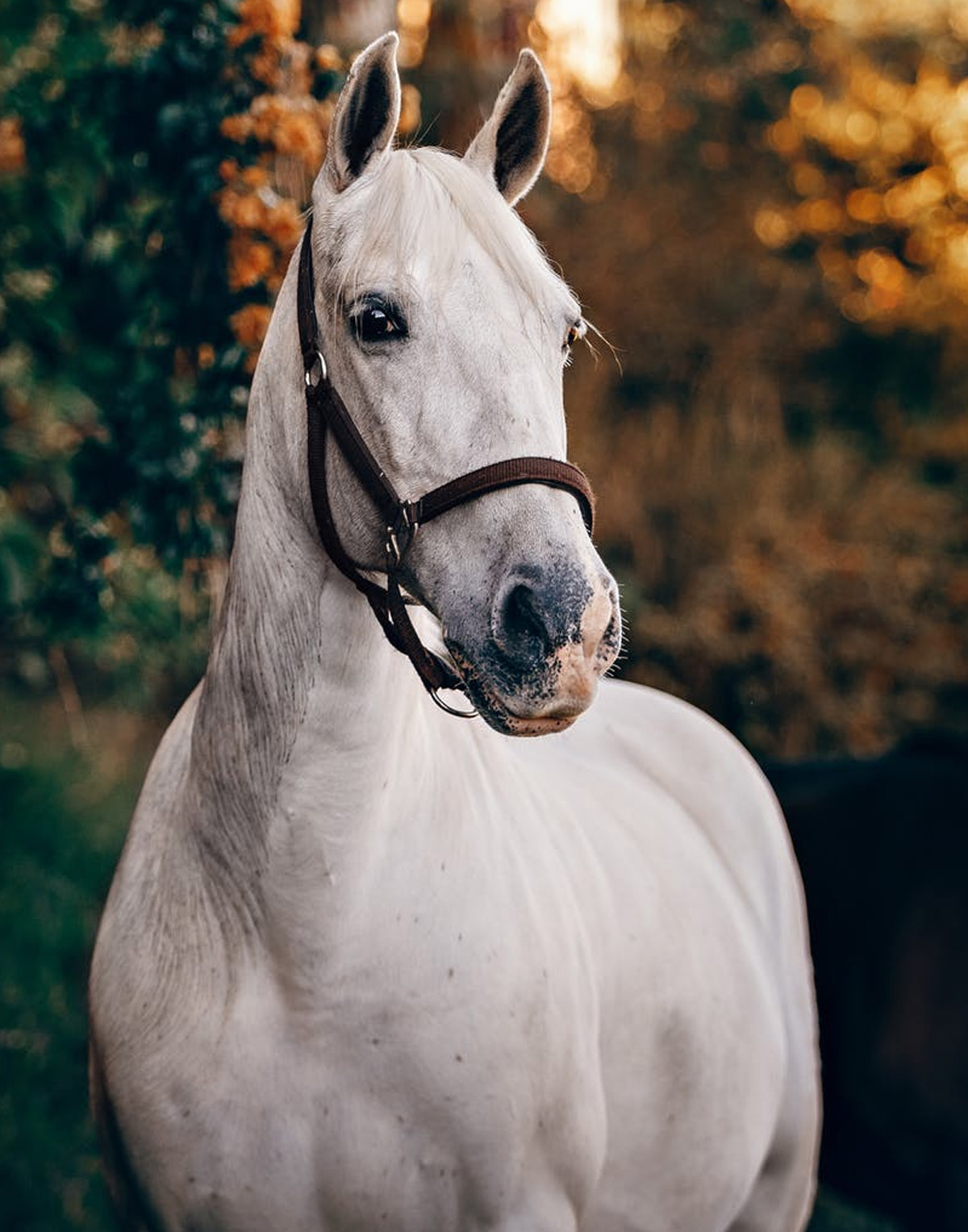 CBD oil for Healthy Horses
